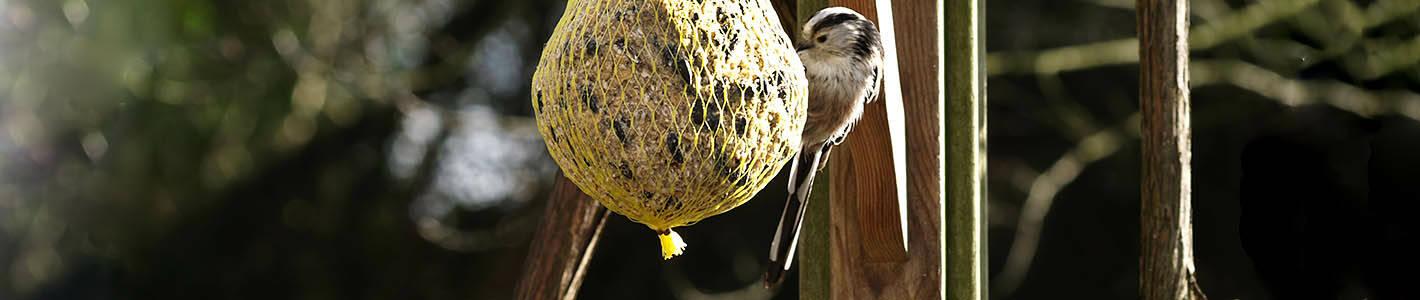 Der Vogelfutterhersteller Donath aus der...