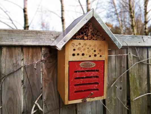 Insektenhotel - sinnvoll oder nicht? -