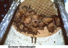 Fledermaus-Großraumhöhle 1FS von Schwegler