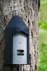 Fledermaushöhle 2F mit Holzplatte als Hängehilfe