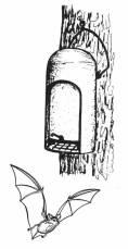 Fledermaushöhle 2FN Holzbeton Schwegler