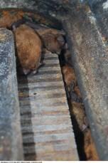 Fledermaus-Überwinterungshöhle 1FW