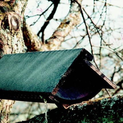 Steinkauzröhre Nr. 22 von Schwegler