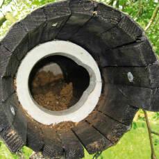 Steinkauzröhre Nr. 20B