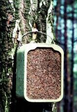 Insektenniststein Holzbeton mit Schilf