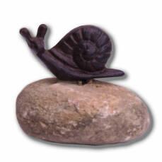 Schnecke auf Stein