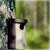 Eulenhöhle von Schwegler für Rauhfuß- und Sperlingskauz