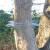Katzenabwehrgürtel zum Schutz von Vogelnestern vor Katzen