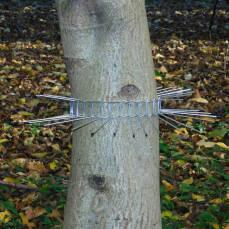 Katzenabwehrgürtel für Bäume bis 70 cm Umfang