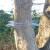 Katzenabwehrgürtel für Bäume bis 115 cm Umfang